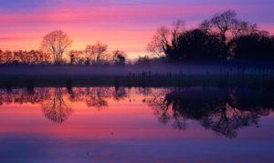 Meadow Mist Rising